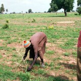 Senegal reforestation