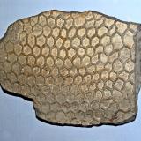 Paleodictyon
