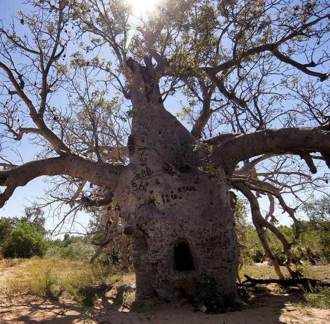 Prison tree